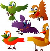 vector animal set 30: birds