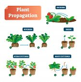Plant Propagation Vector Illustration Diagram. Scheme With Labels On Suckers, Division, Seeds, Stem  poster