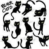 vector black cats