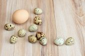 Partridge Eggs And One Chicken Egg For Contrast. Big Chicken Egg Surrounded By Quail Spotted Eggs  O poster
