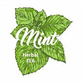 Herbal Tea With Fresh Mint Logo Template. Isolated Hand Drawn Marker Painting Label With Peppermint. poster