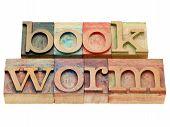 foto of bookworm  - bookworm  - JPG