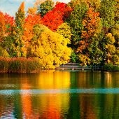 Beautiful Autumn Park With Colourful Leaves, Trees And Lake. Autumn Landscape.park In Autumn. Forest poster