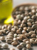 Close Up View Of Hemp Seeds And Hemp Oil On Brown Wooden Table. Hemp Seeds In Wooden Spoon And Hemp  poster