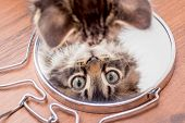 A Little Kitty Looks In The Mirror, The Top View. Displays Kittens In The Mirror poster