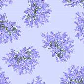 Blue Purple Agapanthus On Light Purple Background. Vector Illustration. poster