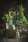 Clover Tincture Or Infusion, Essential Oil Bottle And Medicinal Herbs Bunches Inside The Retro Villa poster