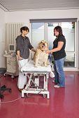 veterinarian preparing examination table