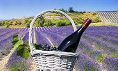 Lavender And Red Wine In The Landscape