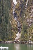 Stream Flowing Past Evergreens Into Icy Fjord