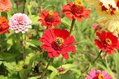 Flores de mamão
