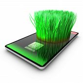 pic of catnip  - A smartphone application is growing grass - JPG