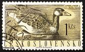 Postage stamp Czechoslovakia 1960 Greylag Goose, Anser Anser