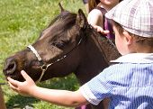 Child Patting Horse