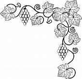 foto of grape-vine  - A grape vine corner background design element ideal for any design relating to wine or with any Mediterranean theme - JPG