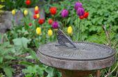 Zonnewijzer In Tulip tuin