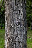 Árbol grueso tronco closeup