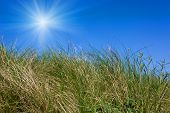 Wield grass on blue sky background with sunshine
