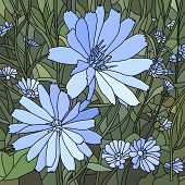 Vector Illustration Of Flower Chicory ( Succory).