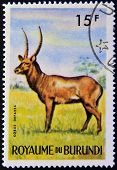 stamp printed in Kingdom of Burundi shows an African animal - Antelope