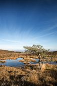 picture of marshlands  - Autumnal vibrant blue sky over marshlands landscape - JPG