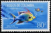 Stamp printed in Colombia shows Pargo Pluma lachnolaimus plumatus