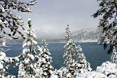 Snow Laden Trees At Lake