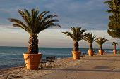 Beach with palms Izola, Slovenia