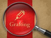 Grafting Concept: Magnifying Glass