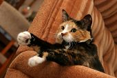 Relaxed Cat...