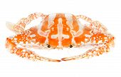 pic of blue crab  - Steamed Blue crab or Flower crab isolated on white background - JPG