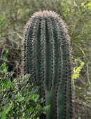 Close up of a prickly cactus