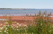 picture of clam digging  - People out enjoying a walk on the beach.