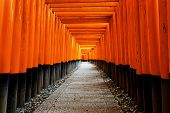 foto of inari  - Fushimi Inari Taisha Shrine in Kyoto City - JPG