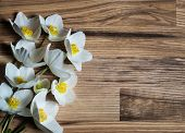 foto of windflowers  - Spring flowers on wooden background  - JPG
