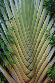 Palm_pattern