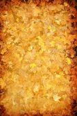 Grunge Abstract Autumn Leaf Background
