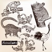 Collection Of Hand Drawn Animals And Swirls