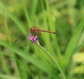 Dragonfly on the flower in garden