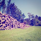 pic of afforestation  - The Logging in Southern Bavaria Photo Filter - JPG