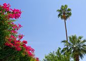 Tropical Palm Trees And Flowers