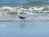 Bird At Beach poster