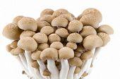 Buna Shimeji Mushrooms.