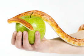 stock photo of adam eve  - Eve temptation by snake with green apple - JPG