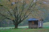 pic of shacks  - a little shack sits under the branches of a large tree in early autumn - JPG