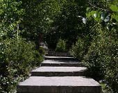 Stairways In Foresty Muktinath Temple Complex