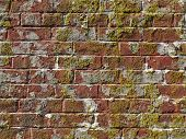 Old worn red brick wall with moss growing