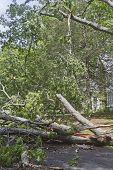 Storm Downed Tree Blocks Road