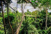 Canopy Walkway Of Kakum National Park