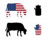 American Milk Cow